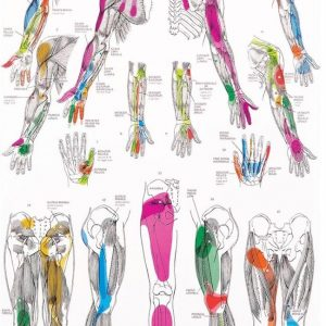 trigger-points-chart-massage-therapy-649x1024